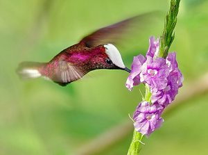 nectar-feeding birds