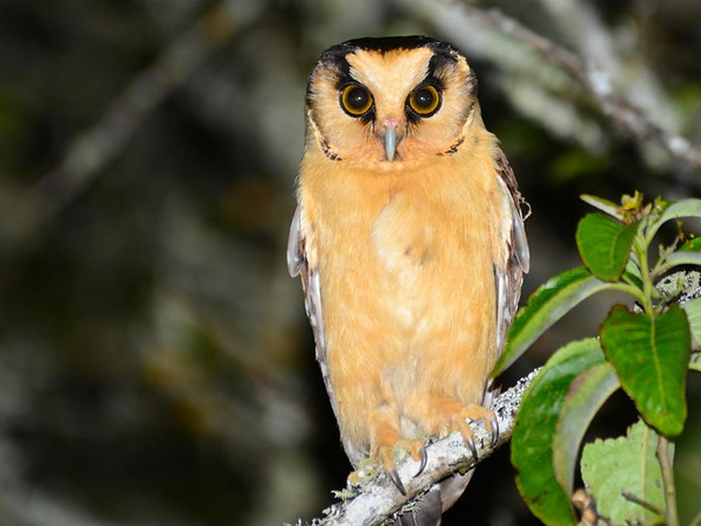 Top birds of peru