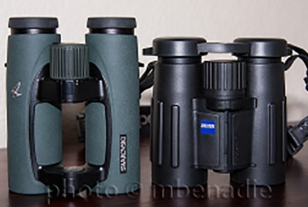 Best binoculars for birding