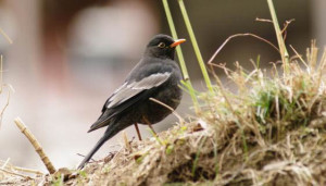 birding ecotours bhutan