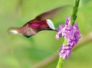 birding ecotours hummingbirds