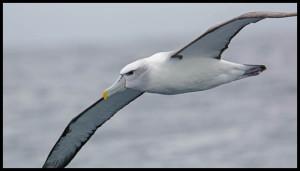 birding ecotours pelagic