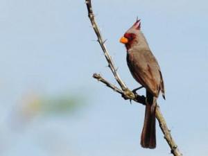 birding ecotours taiwan