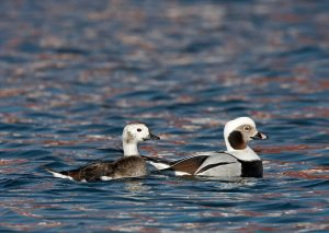 Pelagic Birding Tours