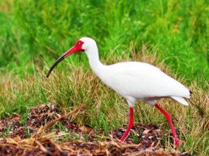 USA Birding Tour