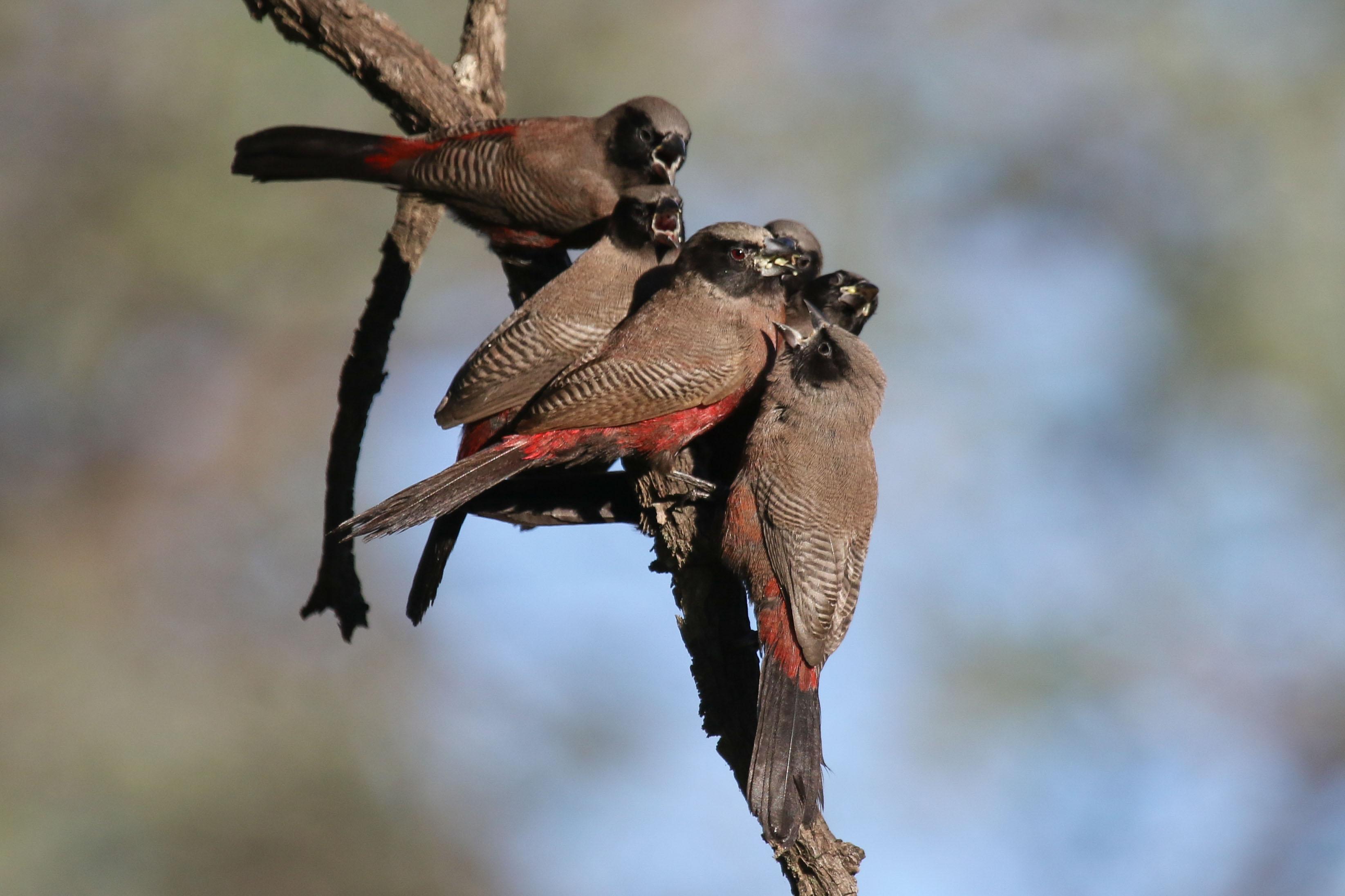 1-3-day Northeastern Gauteng Birding Tour