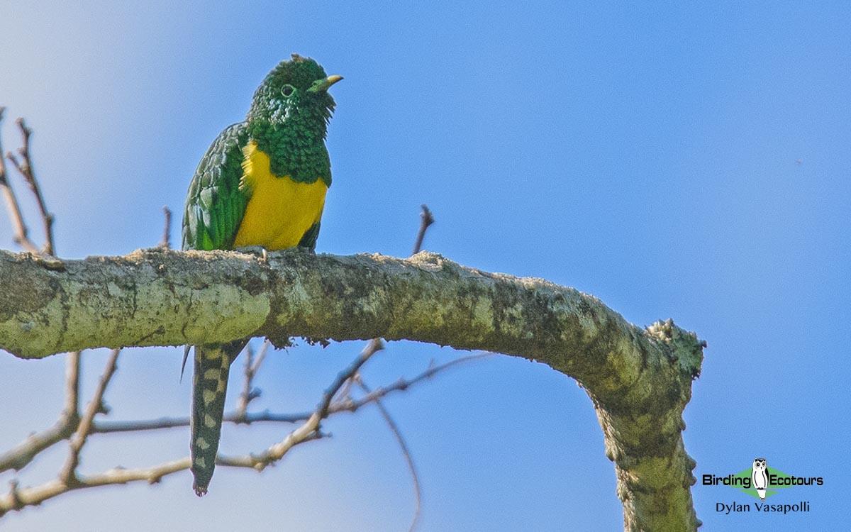 Kenya birding safari