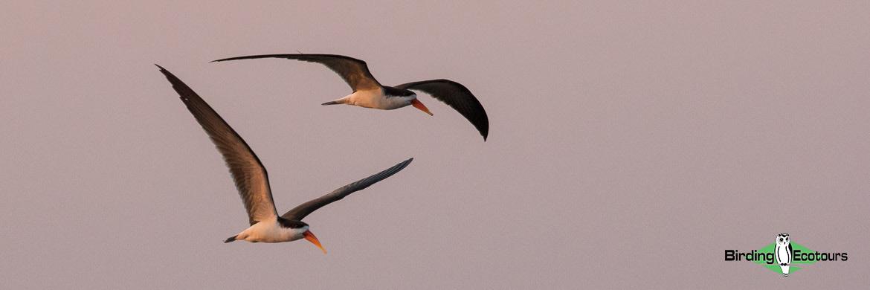 Custom-made Botswana birding tours