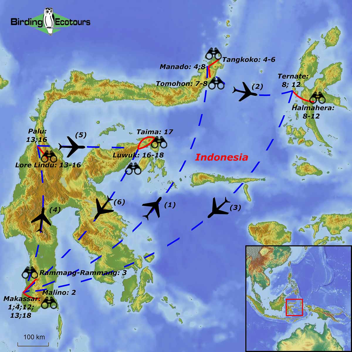 Sulawesi and Halmahera birding tour