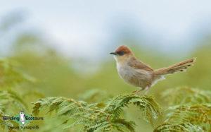 Malawi birding tours