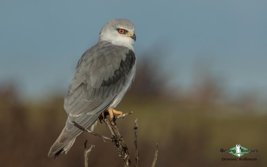 Kenya birding tours