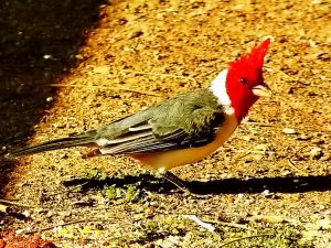 Argentina Birding Tour