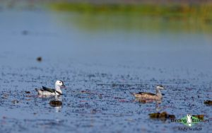 India and Bhutan birding tours