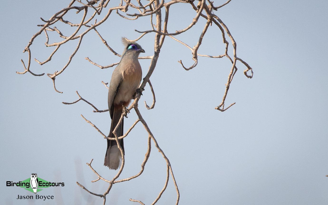 Masoala peninsula birding tours