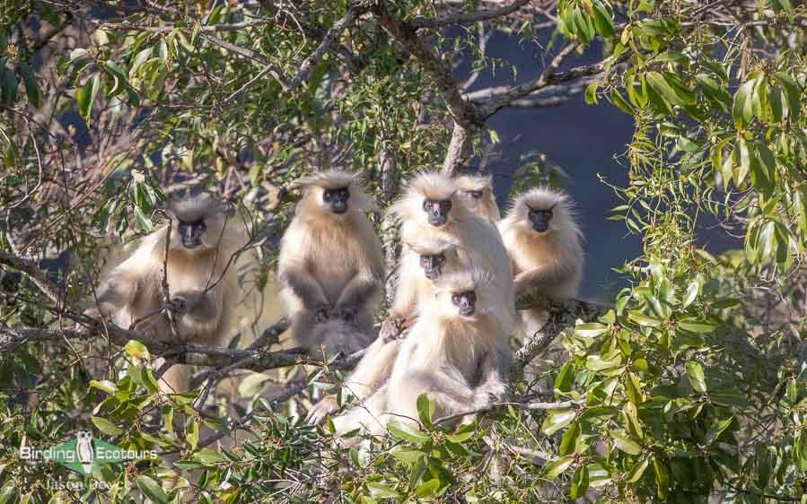 Bhutan Himalayas birding tours