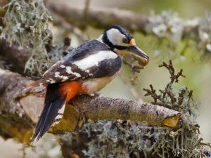 Morocco Birding Tour