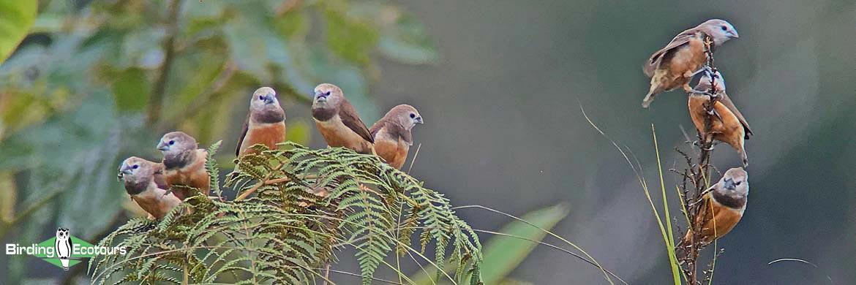 West Papua birding tours
