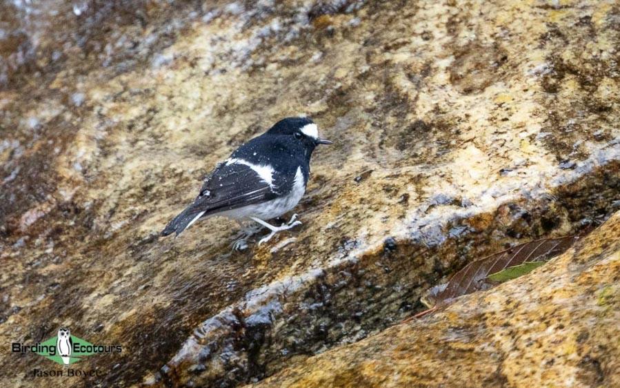 Bhutan birding tours