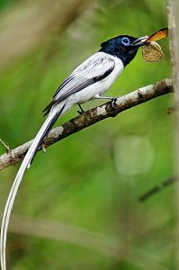 Madagascar Birding And Wildlife Tour
