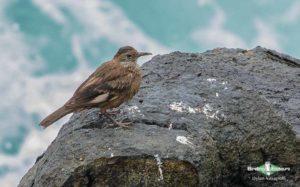 Lima birding tours