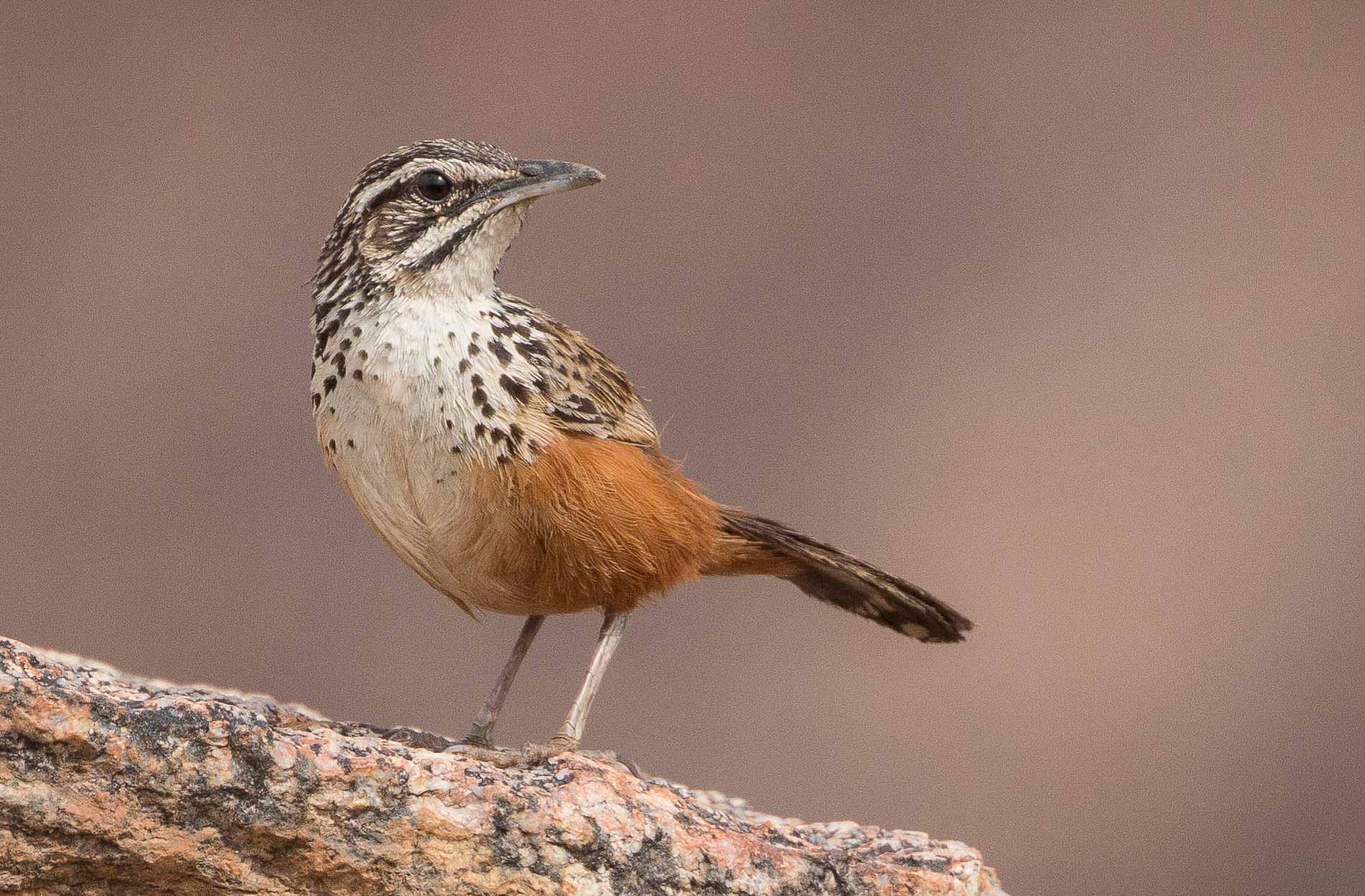 1-day Namibia Birding Tours