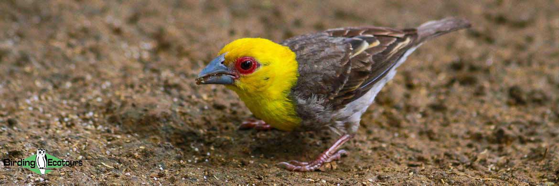 Berenty birding tours