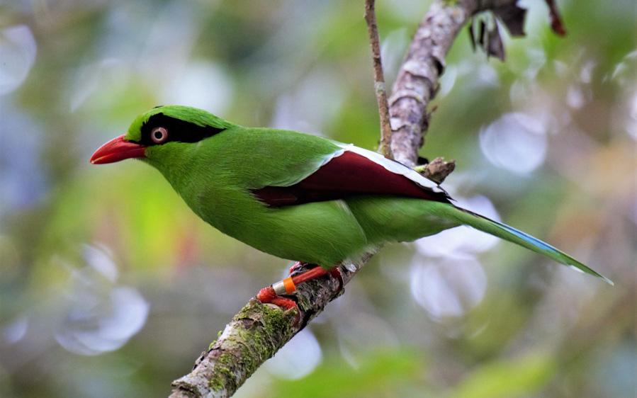 Borneo birding tours