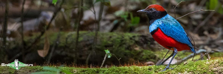 Sulawesi and Halmahera birding tours