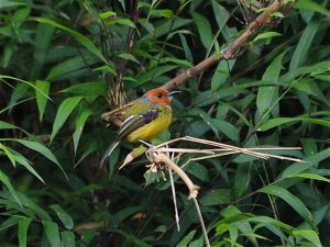 Northwest Peru Birding Tour