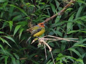 Peru Owling Tour