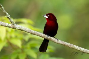Trinidad And Tobago Birding Tour