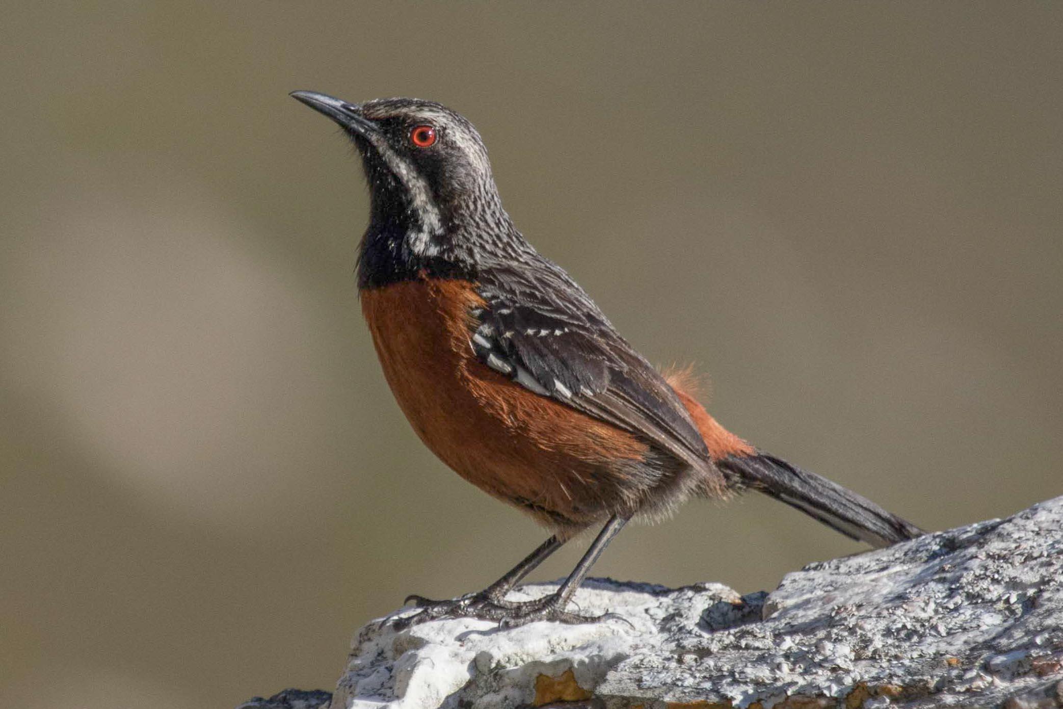 1-day Cape Peninsula and False Bay Birding Tour