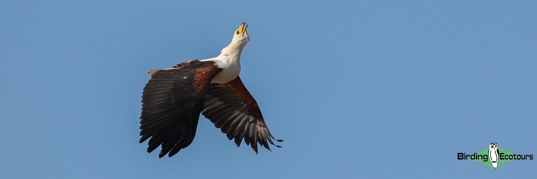 Johannesburg and Pretoria birding tours