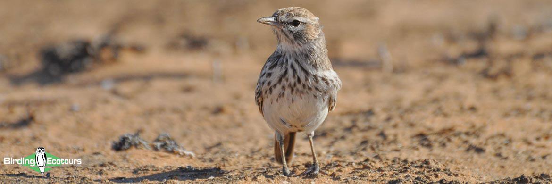 Northern Cape birding tours