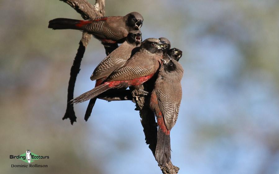Johannesburg birding tours