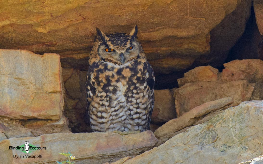 Owls and flufftails birding tours