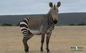 Western Cape photography tour