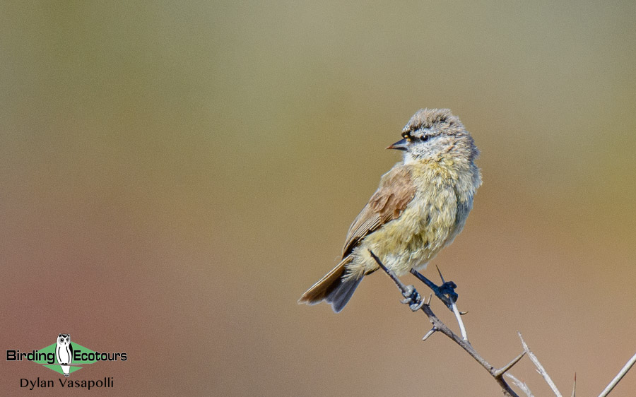 South African photographic tour