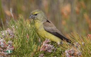 Cape Peninsula birding tours