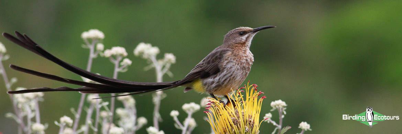 Cape bird watching tours