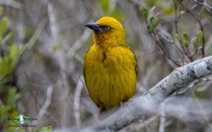 Johannesburg botanical gardens birding tours