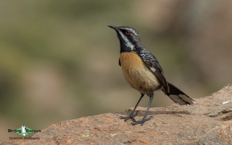 Drakensberg birding tours