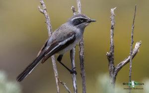 Cape Birding tours