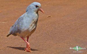 Pacific islands birding tours