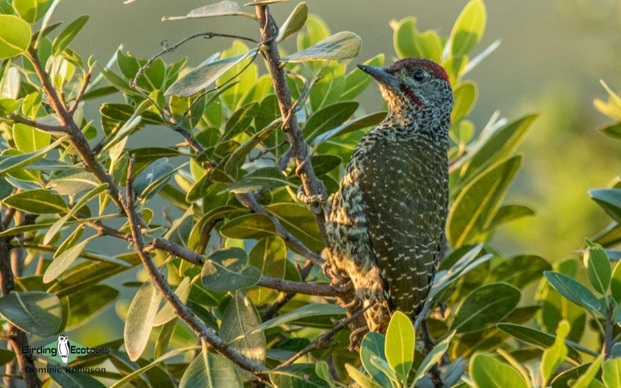Garden route birding tours