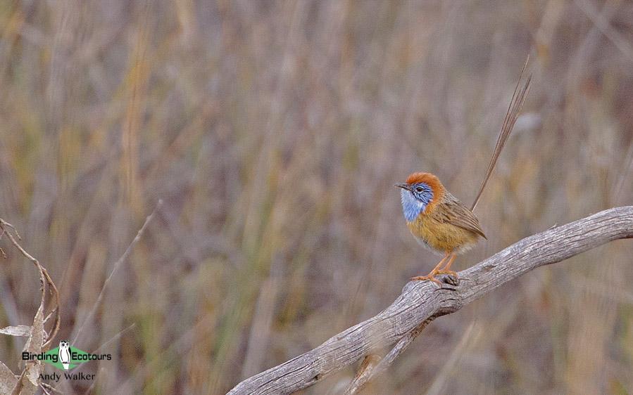 Outback birding tours