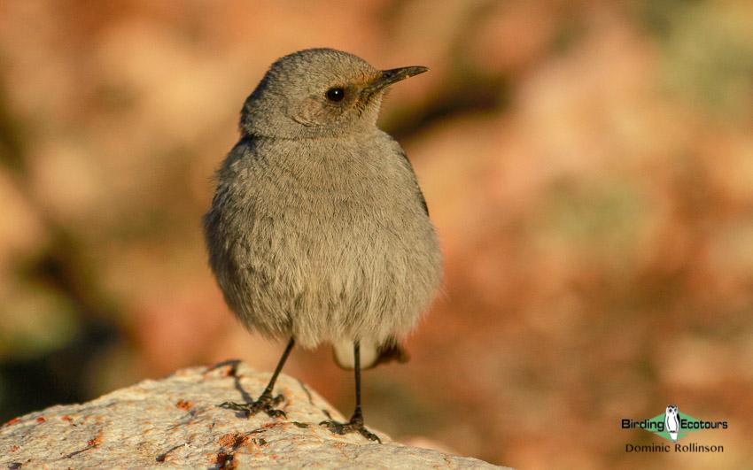 Tankwa Karoo birding tours