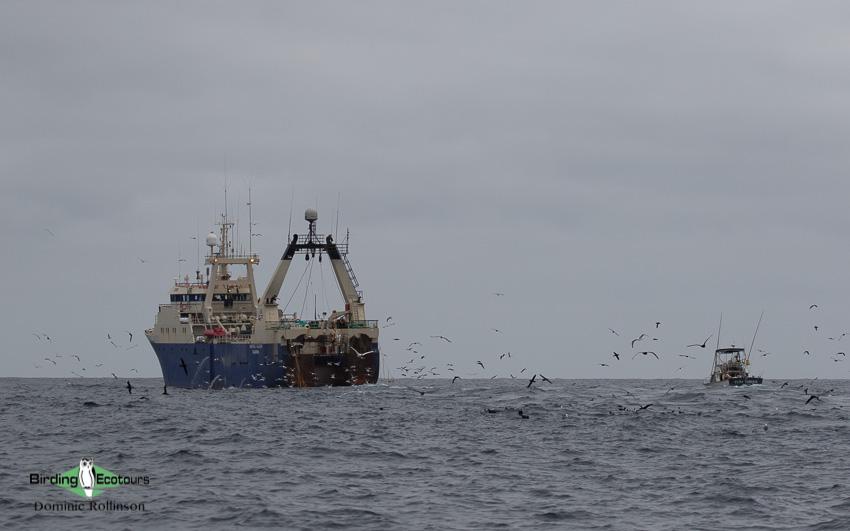Cape Town pelagic trip