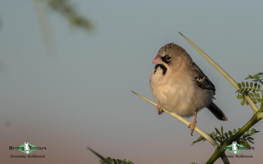 Kruger National Park birding tours