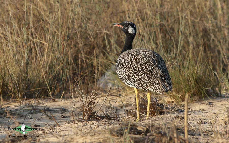 Northern Cape birding tours